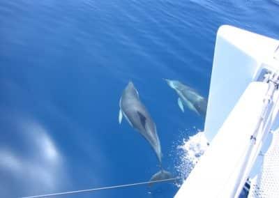 IMG_0243 Delfines en Catamarán Dragón de oro en Málaga