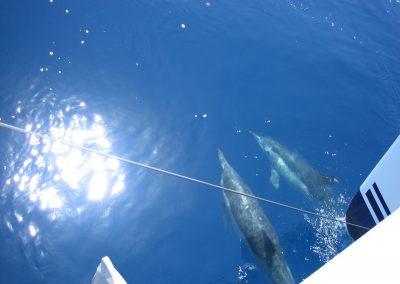 IMG_0254 ver delfines en barco en Málaga, Catamarán Dragón de oro