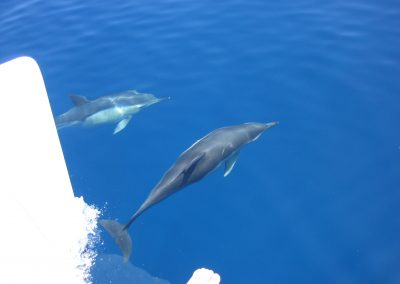 IMG_0255 ver delfines en barco en Málaga, Catamarán Dragón de oro