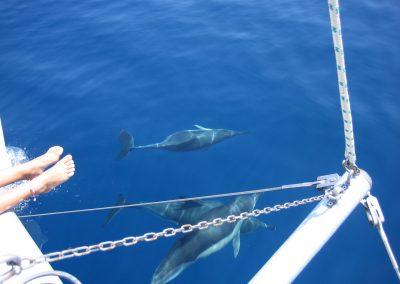 IMG_0262 ver delfines en barco en Málaga, Catamarán Dragón de oro
