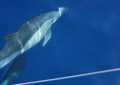 IMG_0331 ver delfines en catamarán Dragón de oro en Benalmádena