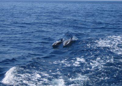 IMG_0346 ver delfines en catamarán Dragón de oro en Benalmádena