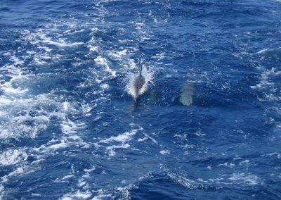 IMG_0350 ver delfines en catamarán Dragón de oro en Benalmádena