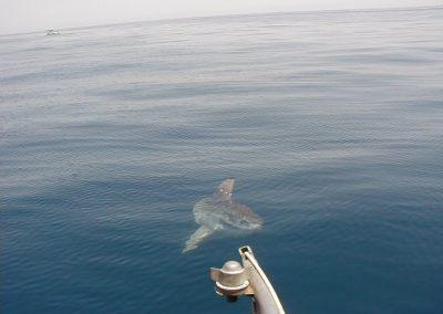 Avistamiento de cetáceos en Málaga