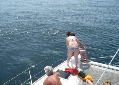 P1020010 Ver delfines desde catamarán Dragón de oro en Málaga