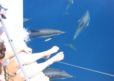 See dolphins by boat in Malaga portada 2