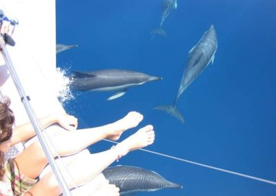 Image see dolphins on boat