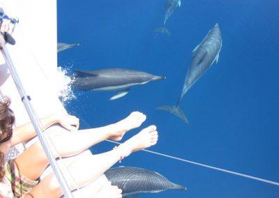 Imagen Avistamiento de delfines desde barco benalmadena