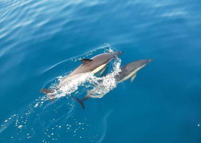 Malaga dolphin spotting from catamaran-min