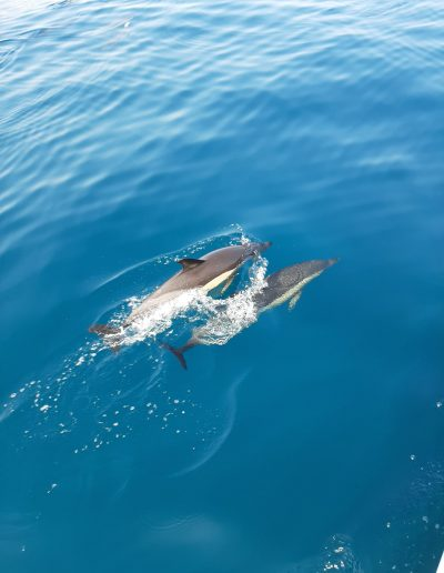 Malaga dolphin spotting from catamaran-min