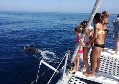 Dolphin watching in Benalmádena-Málaga-min