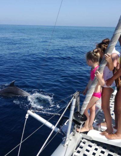 Avistamiento de delfines en Benalmádena-Málaga-min