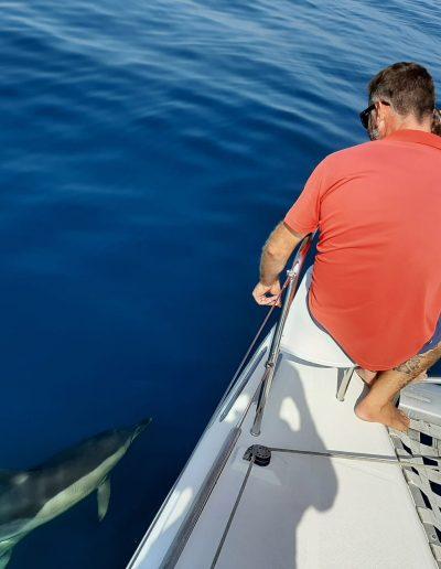 Avistamiento de delfines en Málaga, Costa del Sol-min