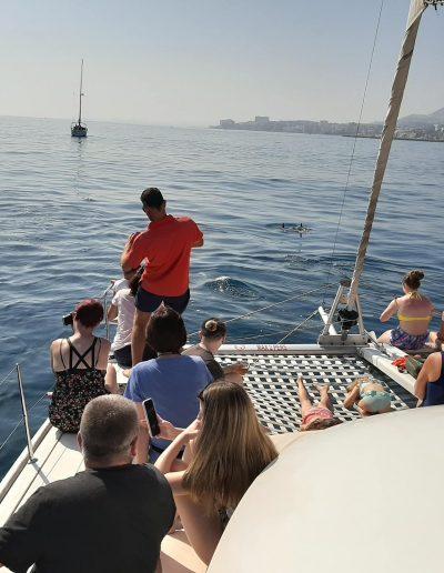 Avistamiento de delfines en Torremolinos, Málaga-min