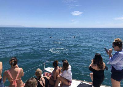Dolphin spotting in Malaga-min