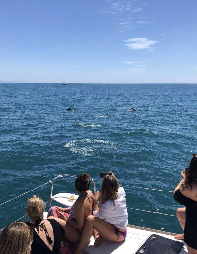Avistamiento de delfines en málaga-min