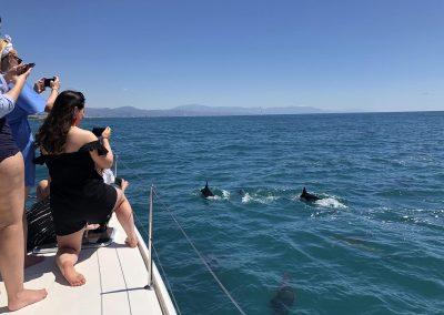 Delfines desde catamarán Benalmádena-Málaga-min