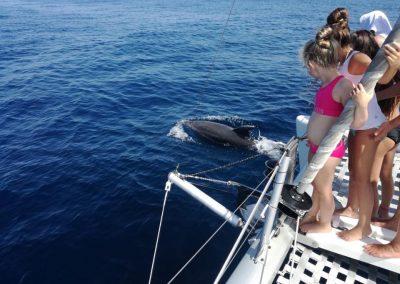 Disfruta viendo delfines desde barco en Málaga-min
