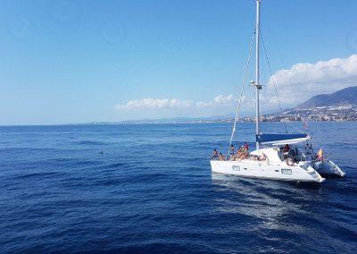 Sailing with dolphins in Benalmadena-Malaga-min
