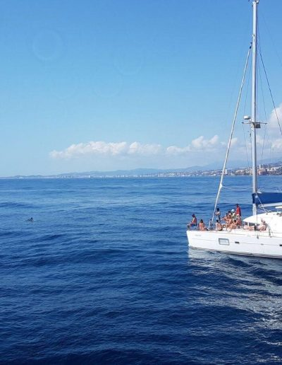Sailing with dolphins in Benalmadena-Malaga-min