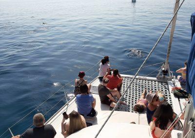 See dolphins in catamaran-boat in Benalmadena-Malaga-min