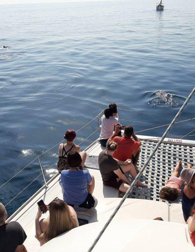 Ver delfines en barco-catamarán en Benalmádena-Málaga-min