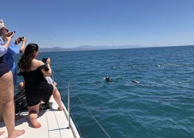See dolphins in catamaran Benalmadena-Malaga-min